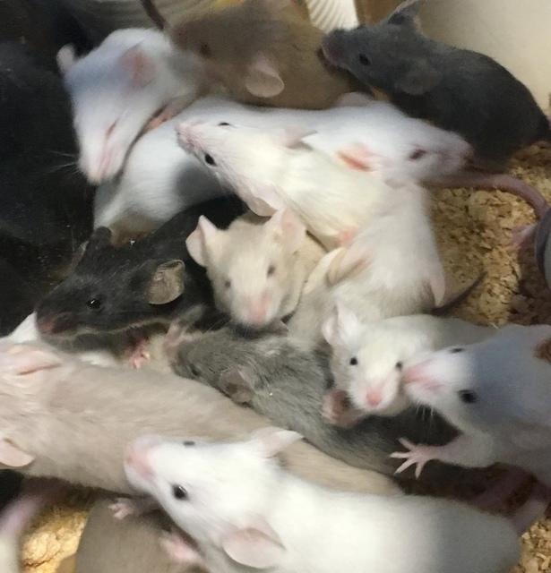 活マウス  カラー各種